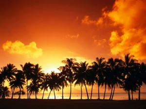 sundown-over-palms-15083